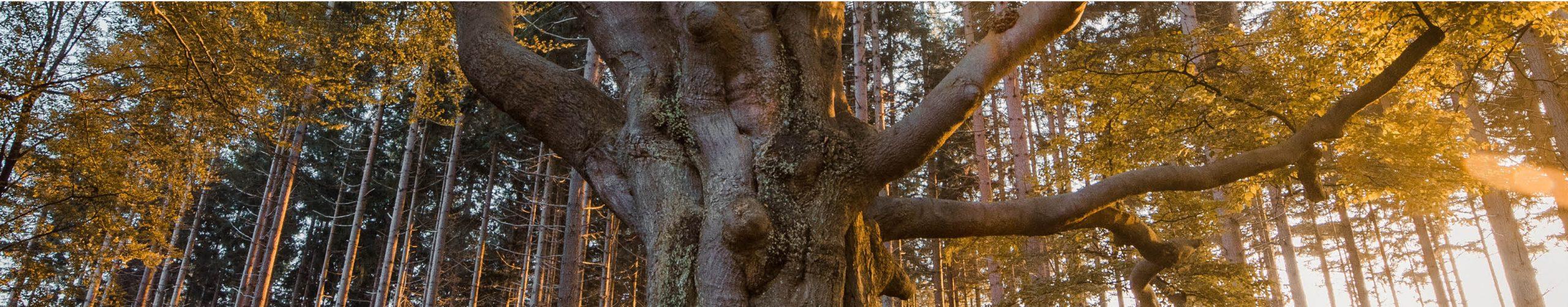 Unsere Verantwortung Wald