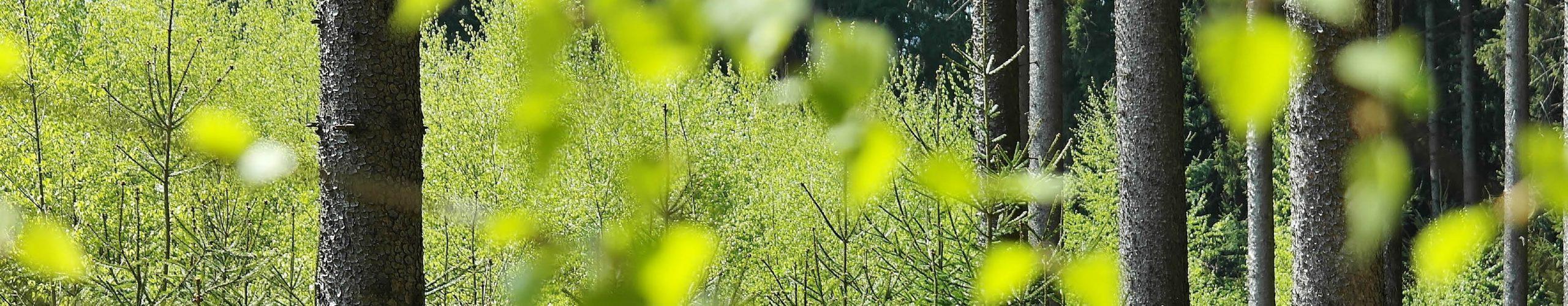 Veranwortung Wald